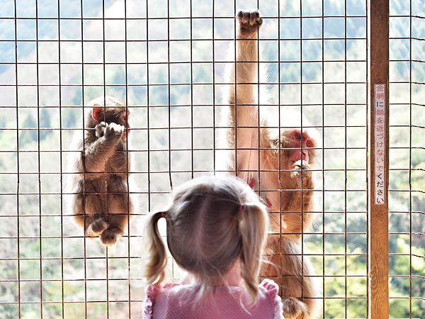 Monkey safety nets