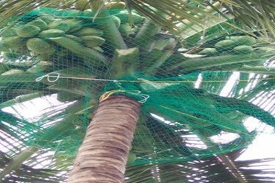 Coconut Safety Nets
